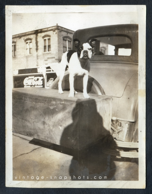Vintage photo of a dog standing on the luggage box of a car.