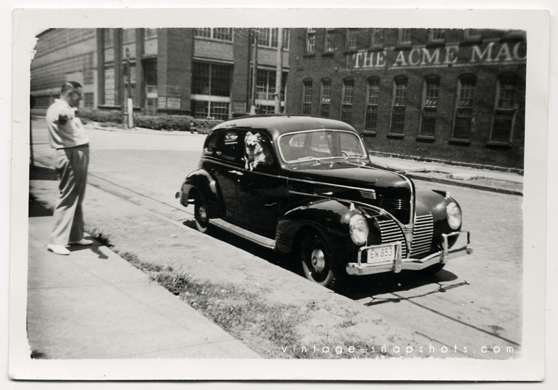 Vintage photograph of dog in 1930s automobile