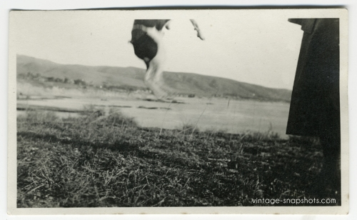 Vintage photo of a dog jumping out of the frame, circa 1920s