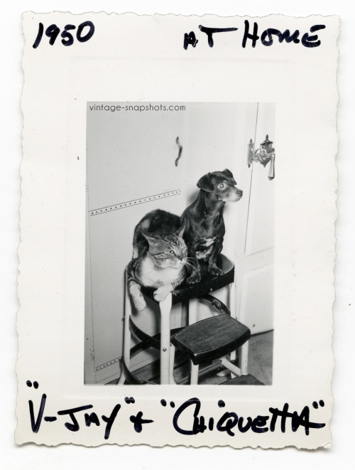 "1950 snapshot of a cat and dog, with their name of the cat noted as ""V-Jay,"" perhaps after V-J Day"