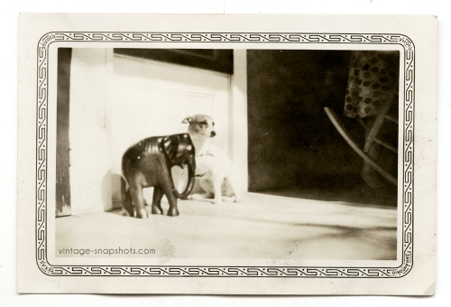 Pretty, abstract shot of a small dog, an elephant figurine, and a view of a woman's leg and part of a rocking chair