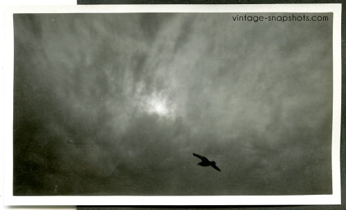 Beautiful c1908 photo of a bird against the clouds