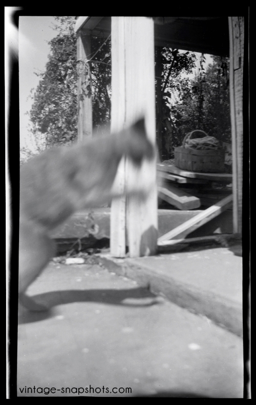 Vintage snapshot negative of a cat leaping towards porch