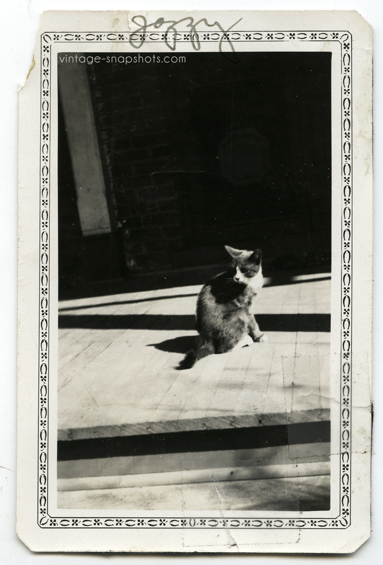 Jazzy-the-Cat-beautiful-old-1920s-snapshot-photo
