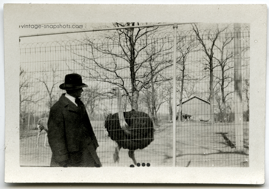 Vintage circa 1920s snapshot found photo of a man facing off with an ostrich