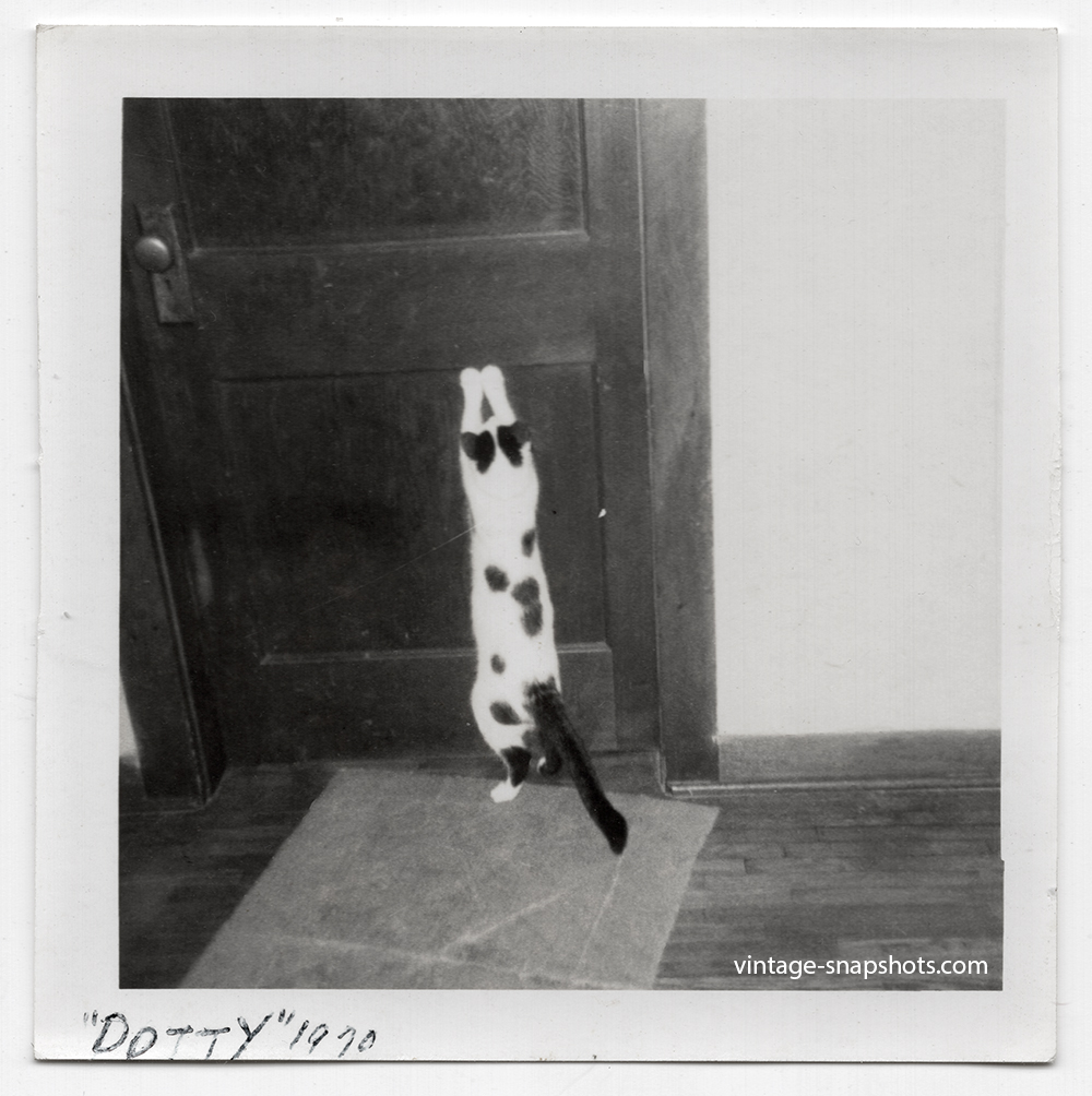 """Vintage snapshot photo of a spoofed cat named """"Dotty"""" with its paws up on a door"""